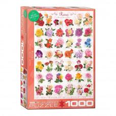 Пазл Eurographics Розы 1000 элементов (6000-0593)