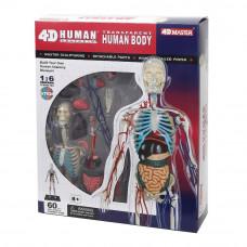Объемная модель 4D Master Тело человека прозрачное (FM-626204)